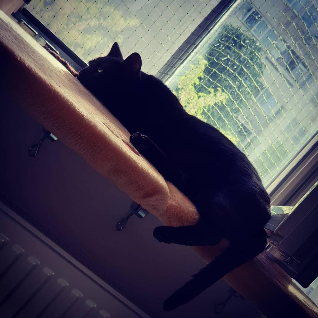 Lazy dragon in the sun . . . #neko #mycat #gato  #blackcatappreciationday #kittensofinstagram #blackcatsofig #instacats #minipanther #catsofinstagram #blackcatlover #blackcatsrock #toothlessthedragon #howtotrainyourdragon #blackcatsmatter #cutecats #blackcatclub #ilovecats #…pic.twitter.com/e9LRy7TRlJ