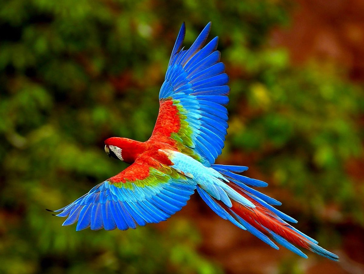 One can never consent to creep when one feels an impulse to soar. Helen Keller