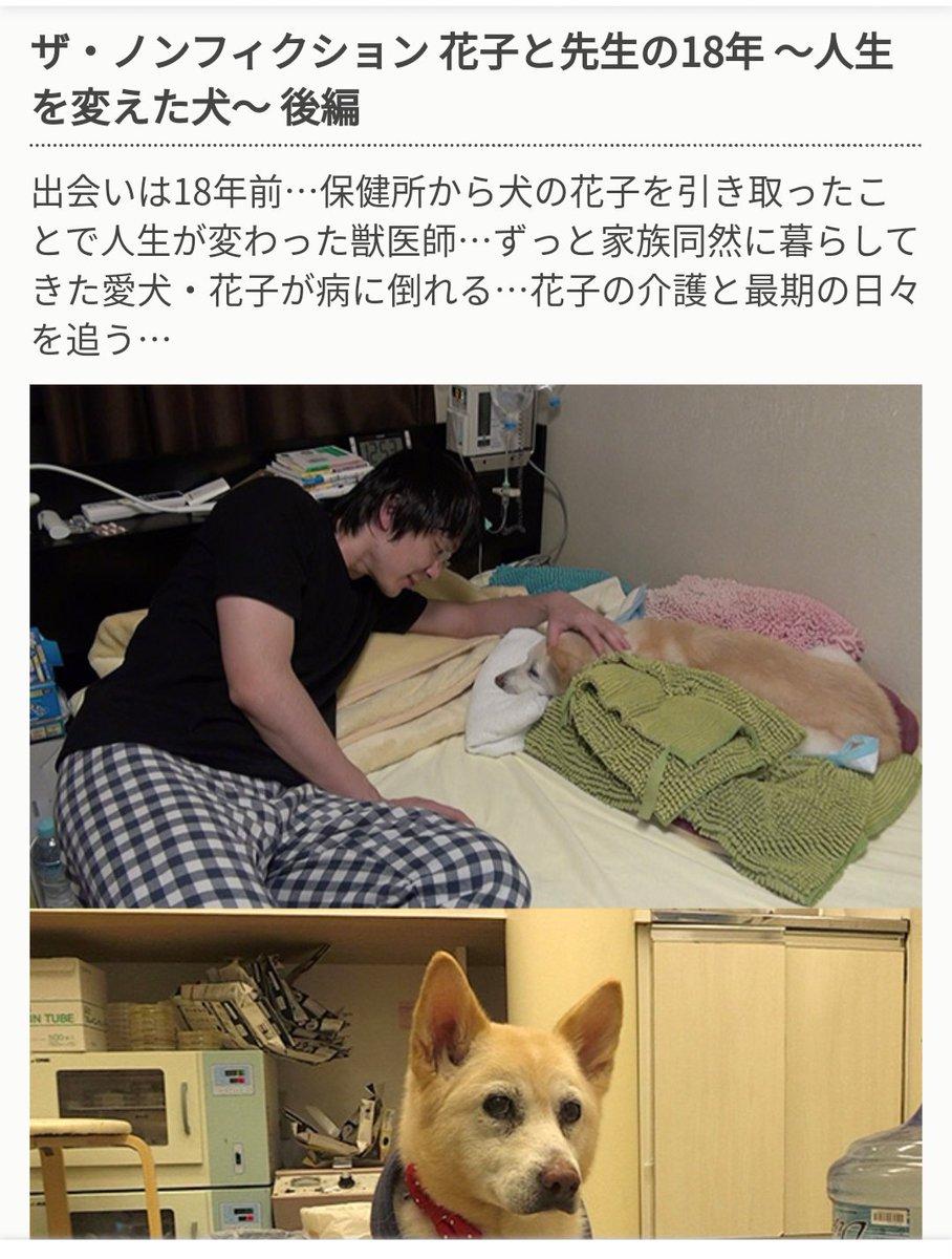 ハナ 動物 病院 花子