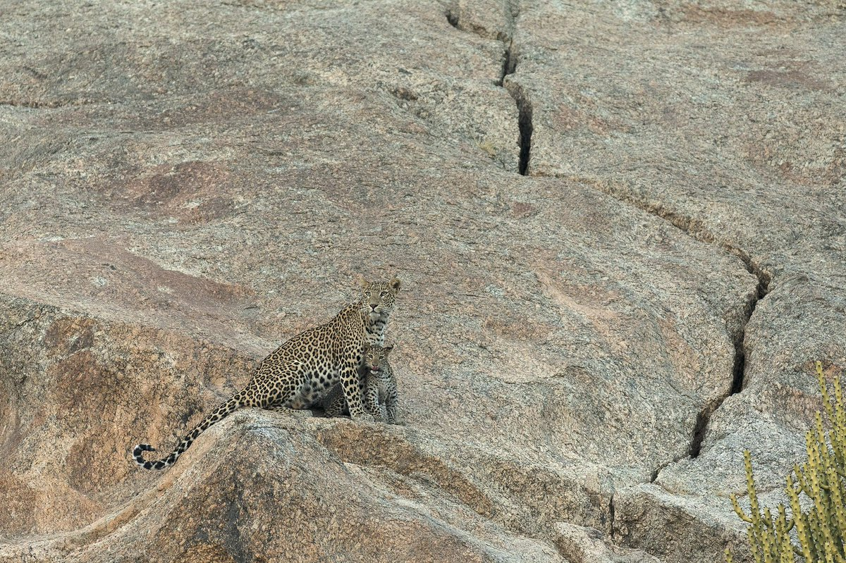 Some terrains like this we will call us leopard terrain, in reality leopards can stay anywhere. They adapt. #wildlifephotography https://t.co/h7qO61v4j5