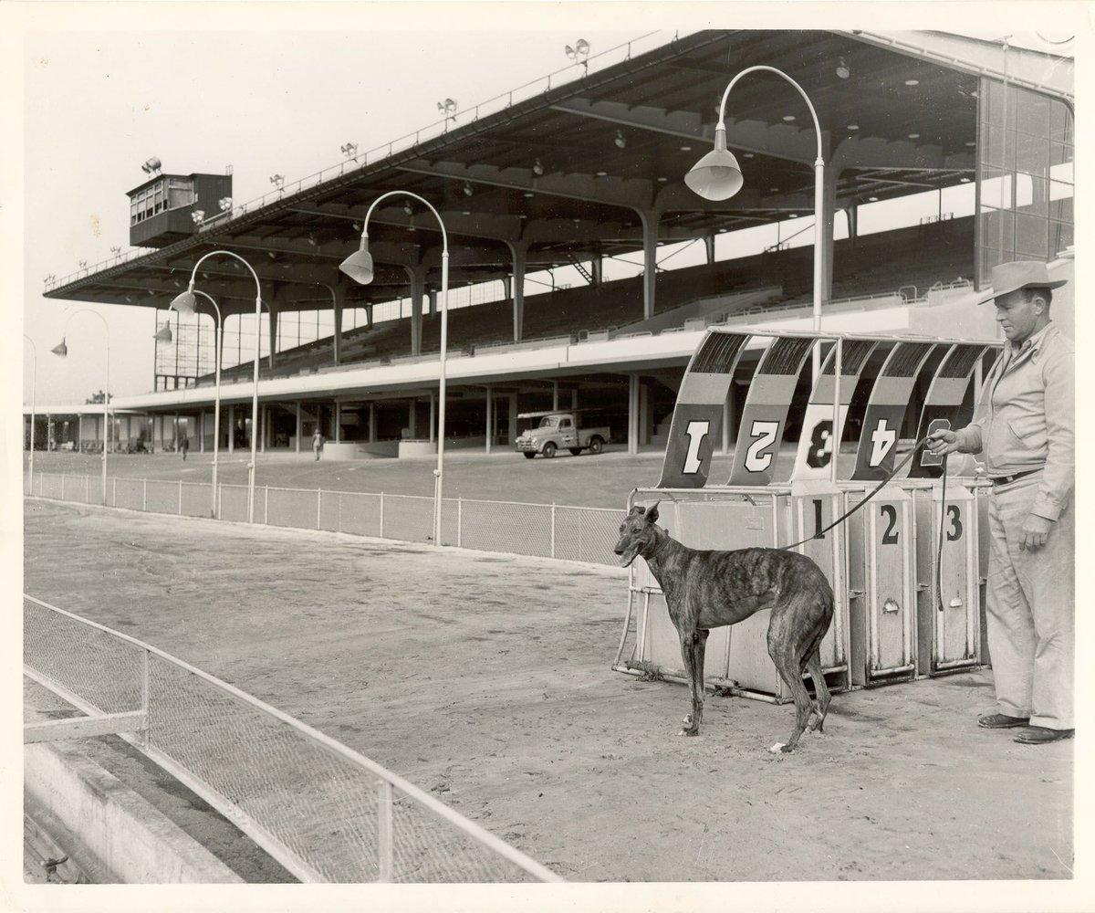 Derby Lane Greyhound Racing