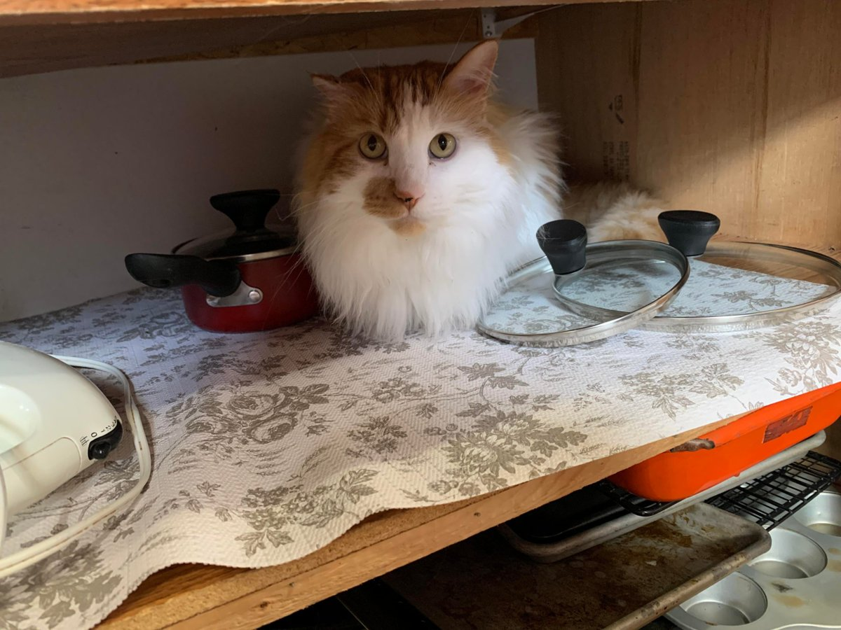 I don't know where this #Pan came from...   #Cats #Cat #Kittens #Kitten #Kitty #Pets #Pet #Meow #Moe #CuteCats #CuteCat #CuteKittens #CuteKitten #MeowMoe   #Dont   https://www.meowmoe.com/633917/i-dont-know-where-this-pan-came-from/…   .pic.twitter.com/ozlK1kKjXa