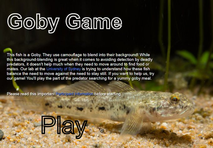 Thanks to everyone who played the goby game first time round. The results were pretty amazing and now we're back with new GobyGame2.0 to dig a bit deeper https://t.co/qmLZejNhpe It takes 2 mins. High-res means phones are out, use full screen. All results anonymous. Please RT! https://t.co/r9rpAeGbEA