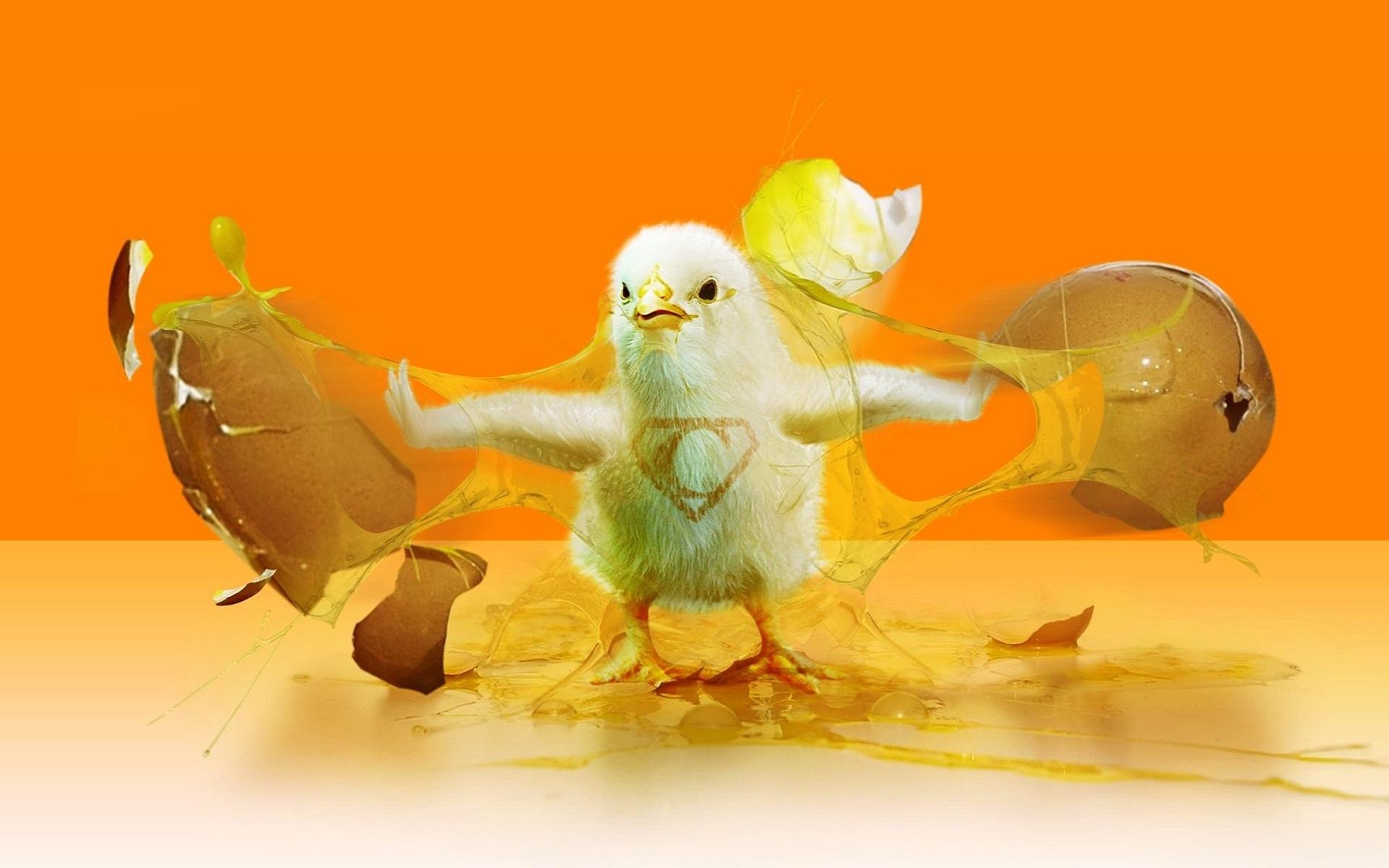 смешные картинки вылупления цыплят дама