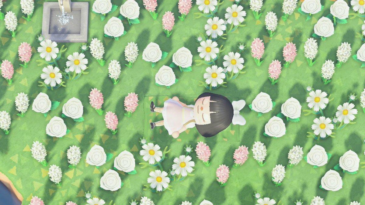Rhii On Twitter Somewhere In The Flower Fields Acnh Animalcrossing