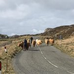 Image for the Tweet beginning: #tolstachaolais #highlanders On the move to
