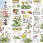 お家の周りにも咲いてるかも?イラスト付きで眺めるだけでも楽しめる「身近な花図鑑」