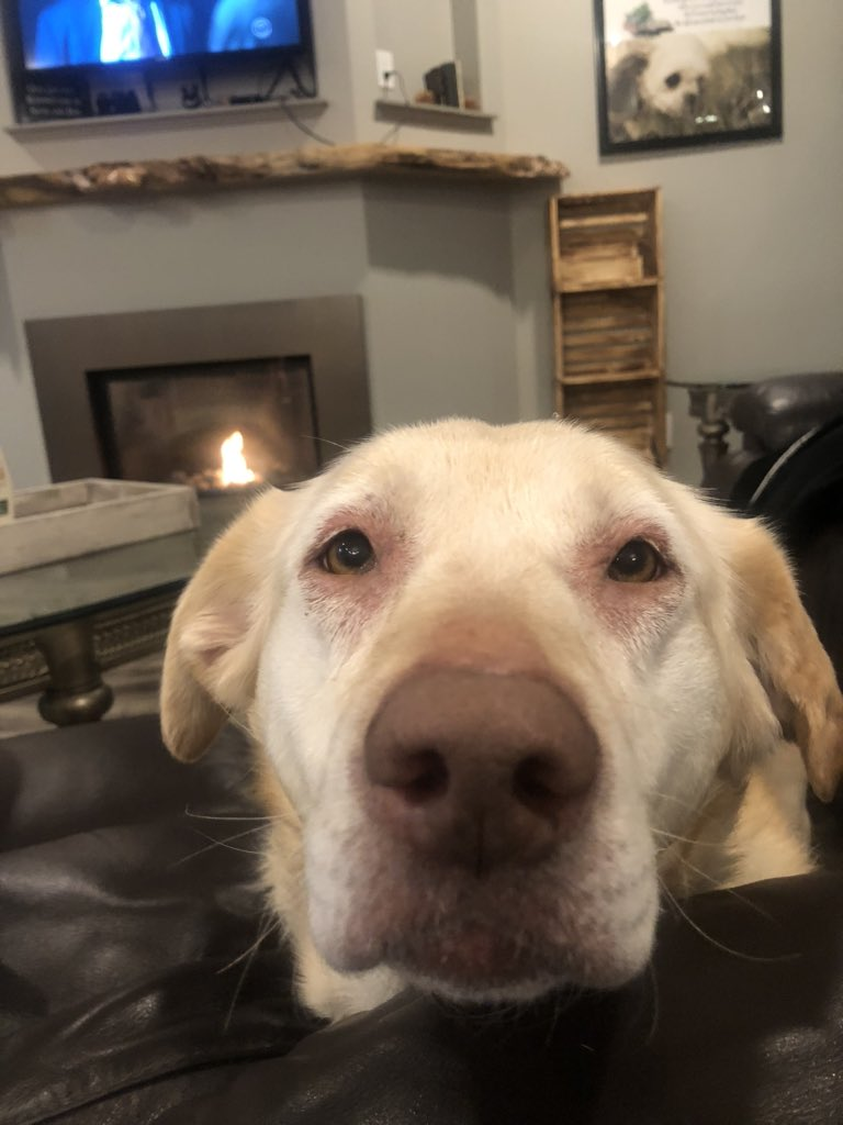 @SarahJoyAdams If you do get to visit. Please show him a doggo to hopefully cheer him up a bit. Autumn says get better. https://t.co/7YTSlI4Ii0