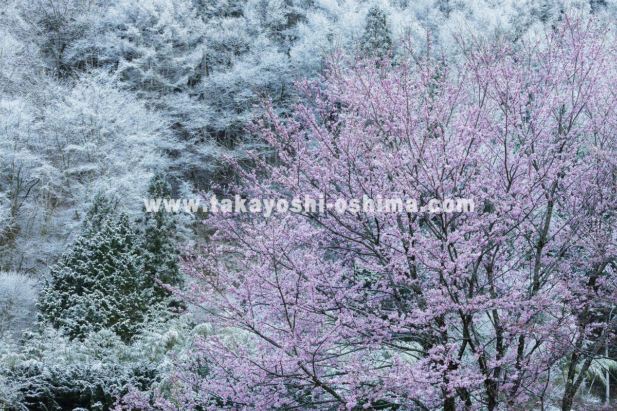 ウェブサイトを更新 https://t.co/ODMUINXGnd  #山岳写真 #山岳風景 #桜 #コロナが収束したら撮りに行こう #自粛中 https://t.co/Nr1Z1tCVno