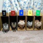 ゲートインした猫ちゃんたち!どの子が一番早い???