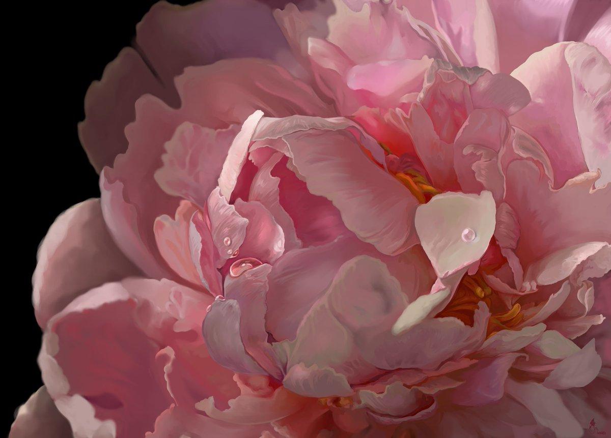 My Grandmother's garden had the loveliest peony plants... I miss gardening so much. Based off photos I took back in 2014.  #flowers #peony #digitalart #digitalpainting #clipstudiopaint #digital #art #gardeningpic.twitter.com/qkH5R0ekTa