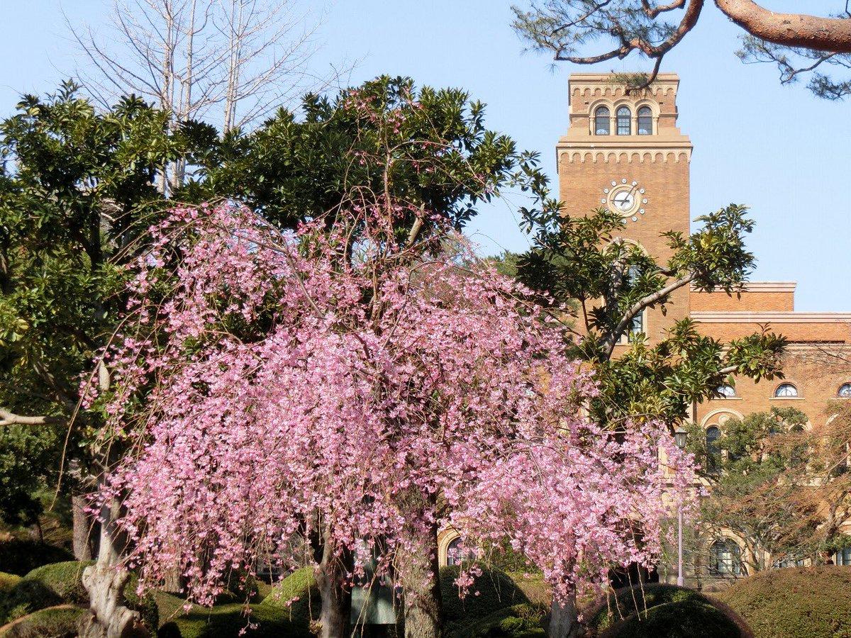 一橋 大学 入学 式 2020