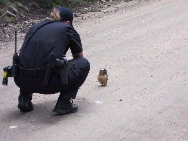 平和な世界??警察に事情聴取されたフクロウの赤ちゃんww