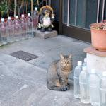 猫除けのペットボトルの効果は嘘!?エイプリルフールネタだったことが判明!