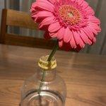 普通に飾るよりも数倍長持ち?!お部屋にガーベラを飾る時は花瓶の水量に気を配ると良い!