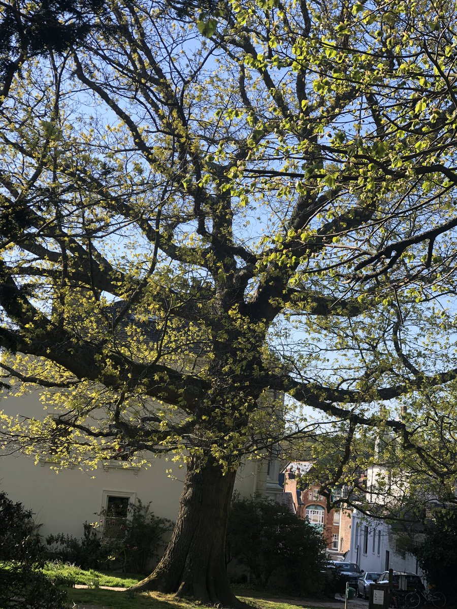 @thegardenspot @GdnMediaGuild Oh good luck to you. And much strength. Here is my favourite tree for you.