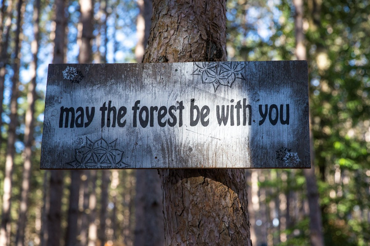 May The Forest be with you. ⚡🌲 #StarWarsDay #ElectricForest #MayThe4thBeWithYou