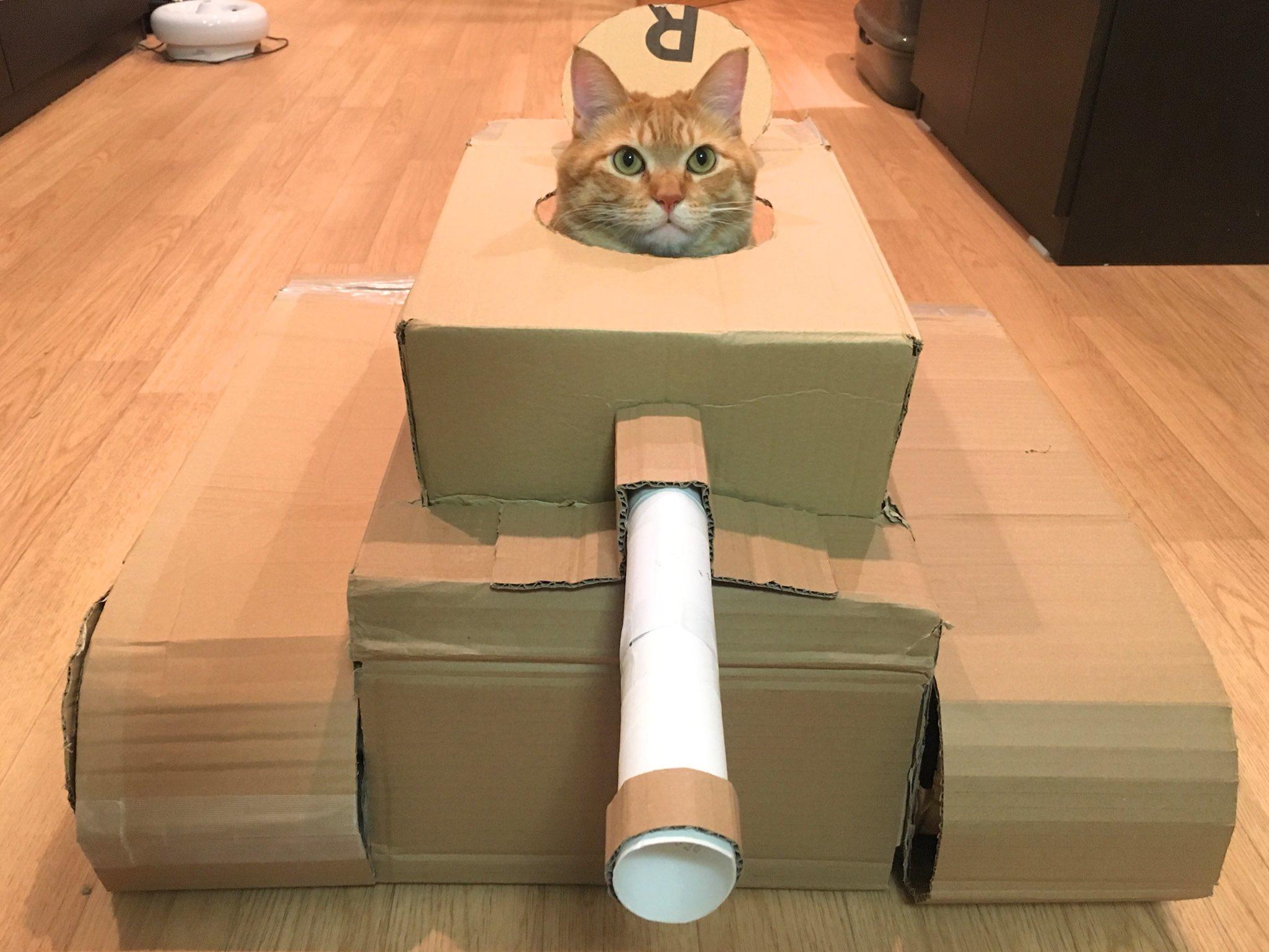 急に段ボールで作り始めたと思ったら??ネコ戦車の完成!ww