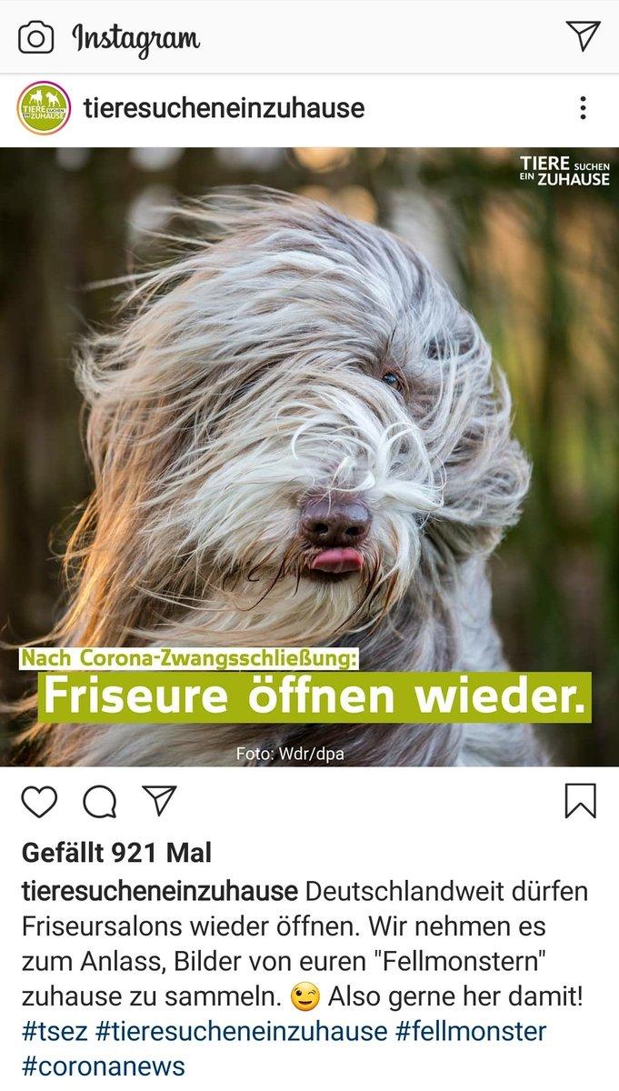 Repost #TiereSuchenEinZuhause pic.twitter.com/abu80e6S1I