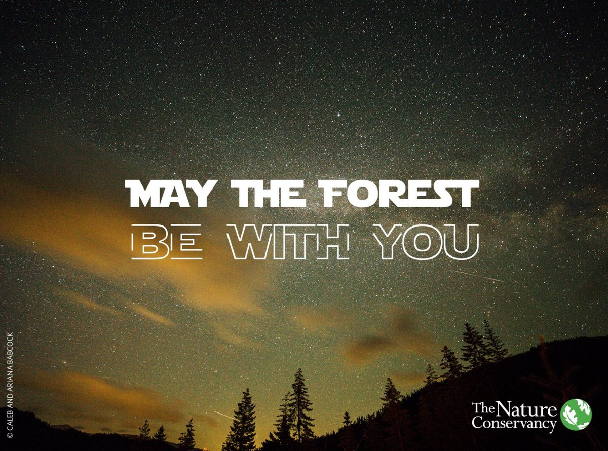 🌳Forget the power of trees you must not.🌳 #MayThe4th #MayTheFourthBeWithYou
