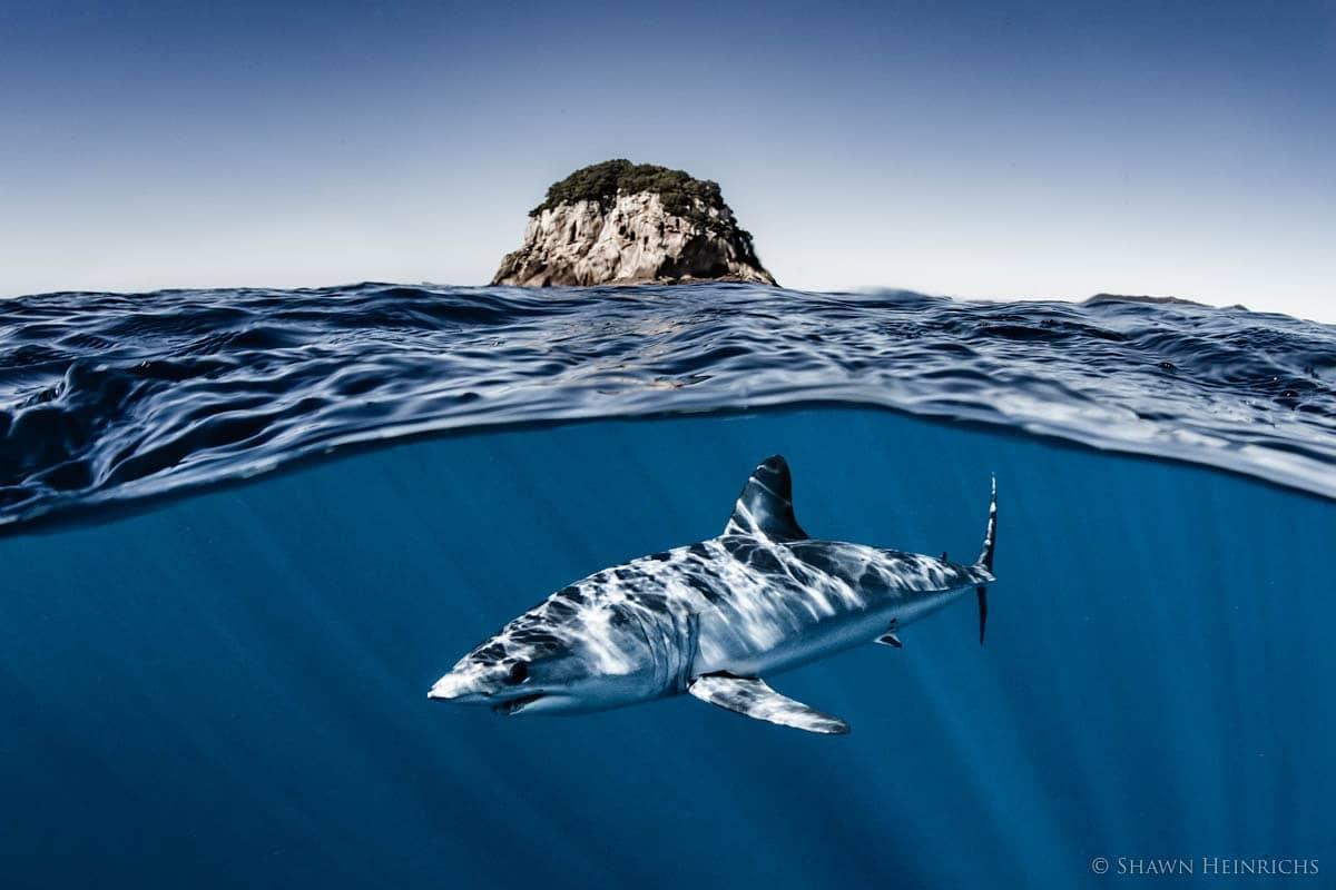 #MakoMonday #MakeTimeForMakos #SharkLeague