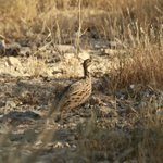 Image for the Tweet beginning: How about some birding?  Spotted! An