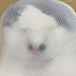 避難訓練のために飼い猫を洗濯ネットに入れたところ、ストッキングネタにしか見えない