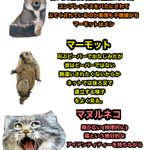 魅力的な動物がいっぱい?チベット高原に住む動物たちを紹介!