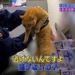 「警察24時」での珍事件!猫がコンビニに入ってくる。追い出してもまた来てしまう!