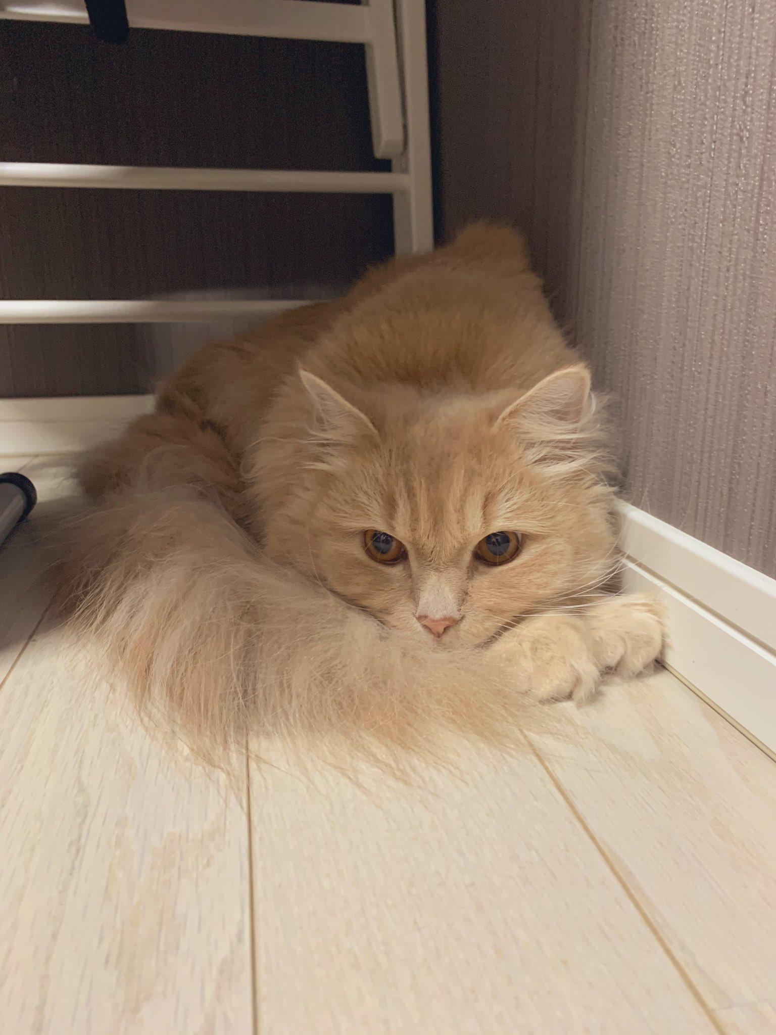 雷の怖さに耐える猫ちゃんがアンモニャイトのよう