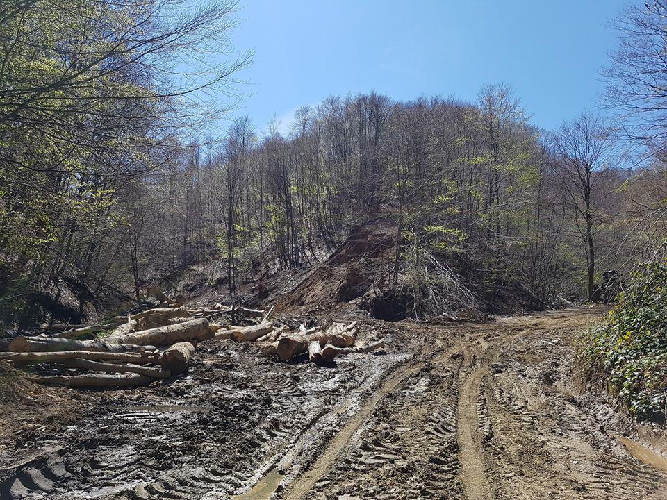 "@WhistlerDick @vladimirgajic1 jer dok Vi gubite vreme na klinačko ""ko ima veći"",  ovi nam urnisaše zemlju. npr, SADA se masovno seče stoletno drveće na planini Kukavica, i priprema se teren gde će 3 reke (Slatinska reka, Ogorelička reka, Muratovica) popakovati u cevi i u beton. have a nice day, both of you https://t.co/mGmhbgurTA"