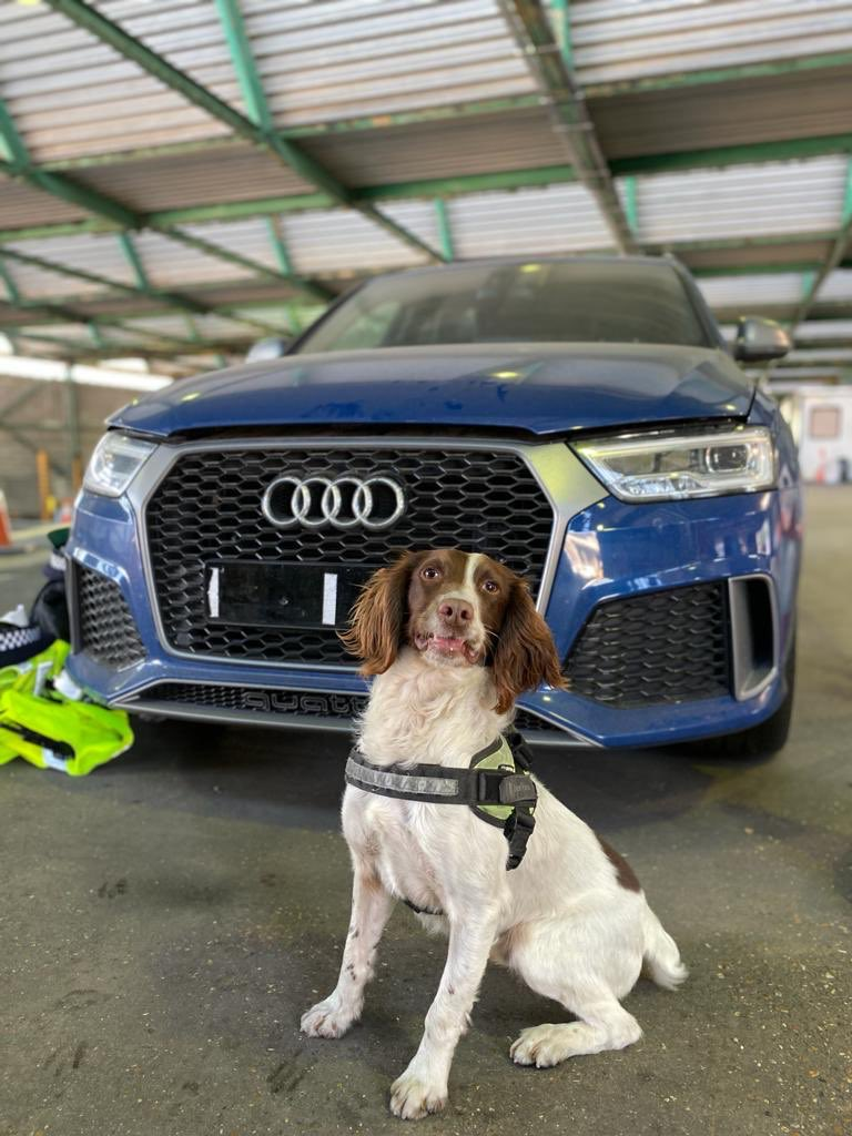 This very enthusiastic Border Force search dog and his handler, helped us out yesterday. He joined our specially trained officers, conducting detailed searches of two seized stolen vehicles. RT #portofdover #portofdoverpolice #vehiclecrime #workingtogether