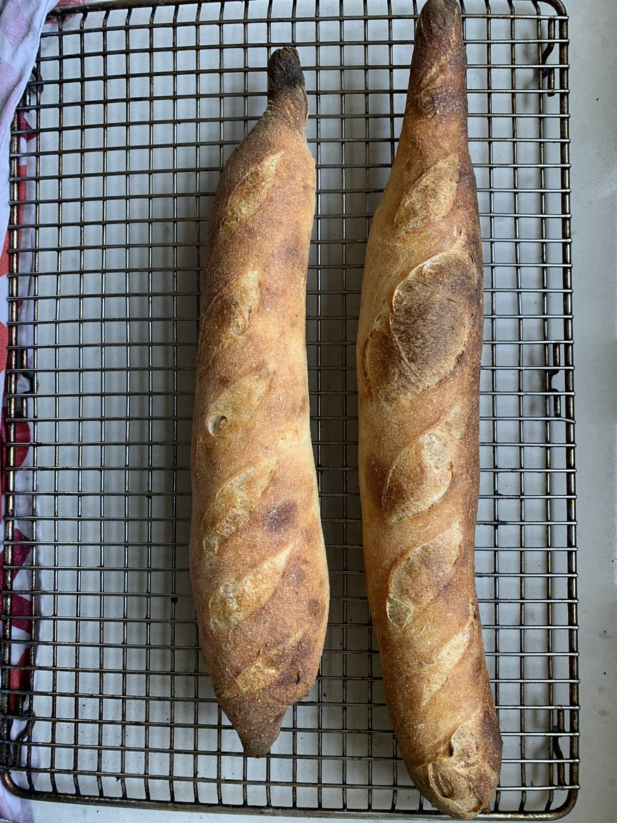 @cejarvis I take your reply guy starter and see you this reply guy sourdough baguette.