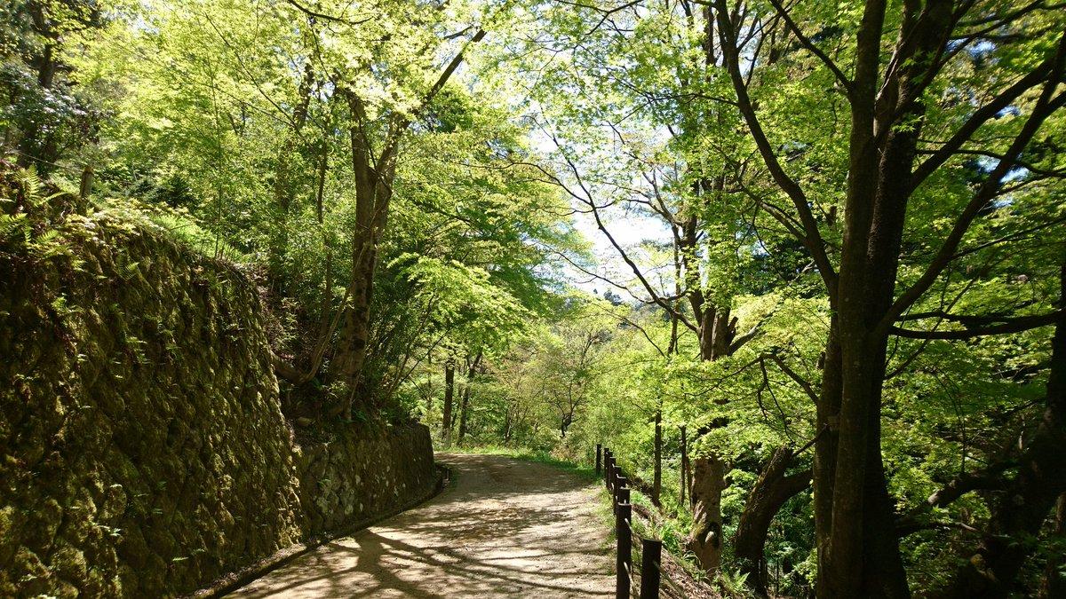城山公園東山遊歩道を散歩👣🚶 今日は爽やかな1日です🌳🌿 https://t.co/ylZGMGWCaV