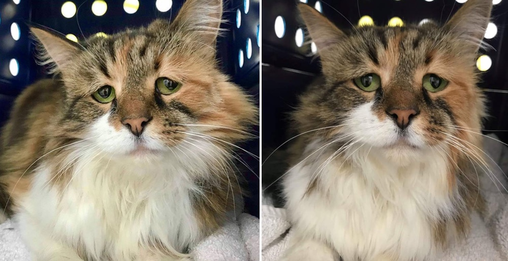 Shy cat finds happiness when she has her dream come true. See full story and updates: lovemeow.com/shy-cat-finds-…