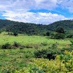 Image for the Tweet beginning: Kuiburi National Park. One of