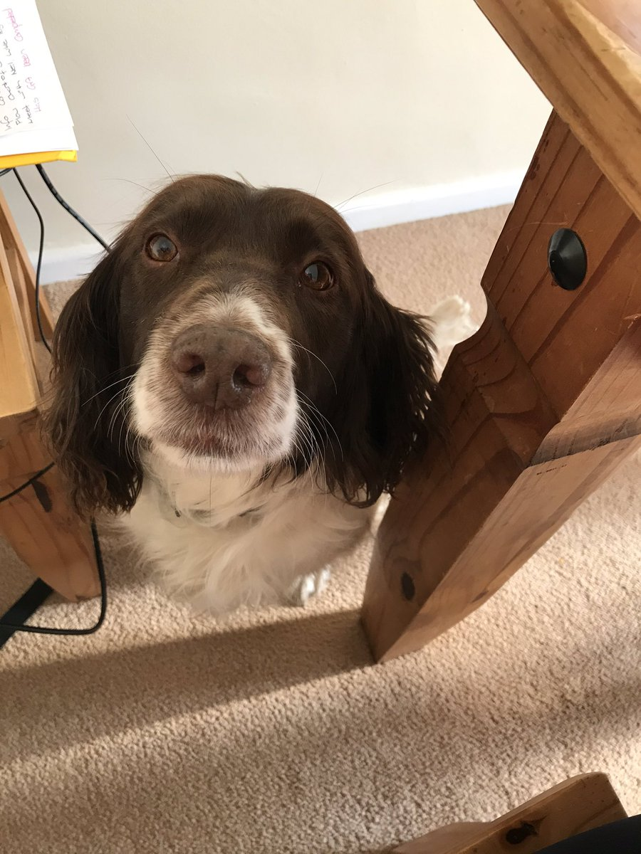 Anyone else being watched constantly whilst trying work? 😀🐶@NickyBottomley