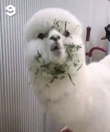 Lunch time? Alpaca my greens https://t.co/0iH4DGApAF
