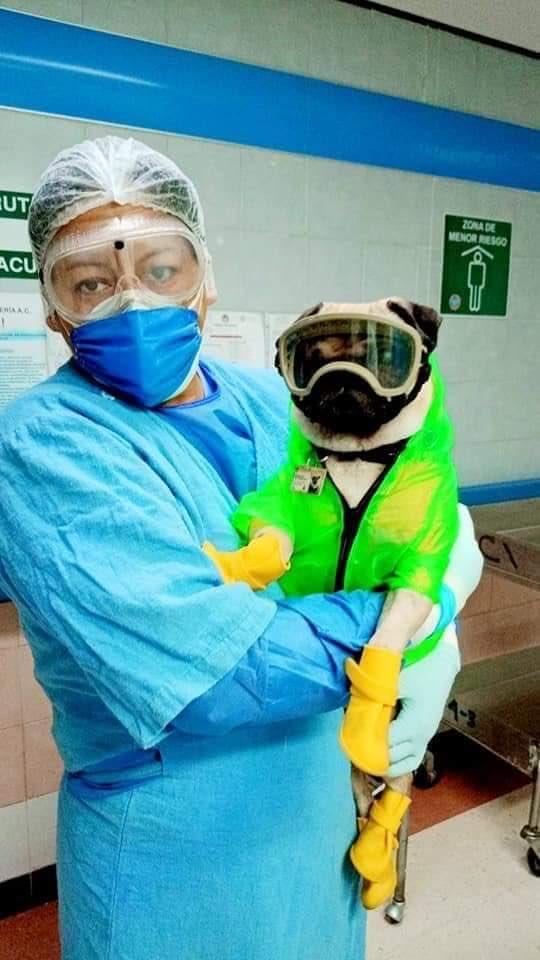 El Centro Médico Nacional 20 de noviembre tiene un perrito llamado Harley el Tuerto, da terapia a los trabajadores que enfrentan esta pandemia 🐶🙏🏽 https://t.co/rC3u3hMoa4