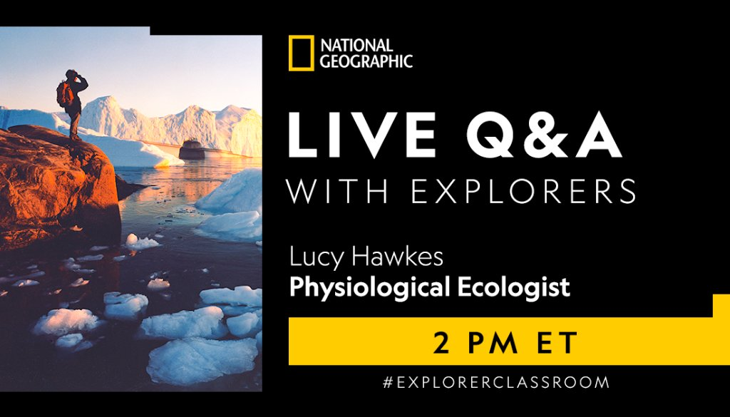 Ready for a virtual show-and-tell? Tune in at 2PM ET to find out what technology is being used to track animals like turtles 🐢, birds 🐦, insects 🐛, and more! #ExplorerClassroom   https://t.co/SMRyVbnZQq https://t.co/qVGwjAZuBc