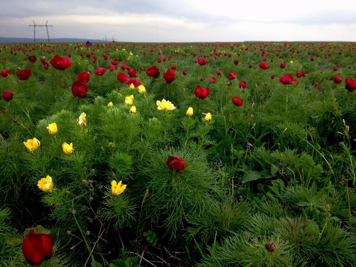 лазоревый цветок фото погибших этом районе