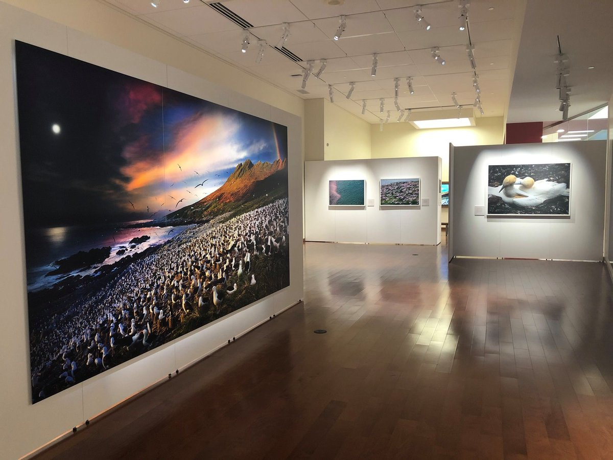 The Library hoped to celebrate the Biggest Week In American Birding with our great @NatGeo exhibit of Stephen Wilkes' stunning photographs of bird migrations. You can still enjoy some of the images here. 🐦#BiggestWeekinAmericanBirding (1/2) https://t.co/pWynDe9qXb