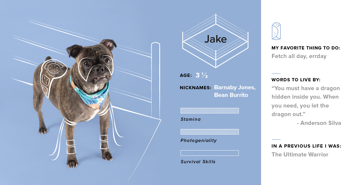 """And in this corner of the #DogsofTG ring... Jake! In Jake's case, his bite is actually worse than his bark. And by """"bite,"""" we mean that snaggletooth. 🐶"""