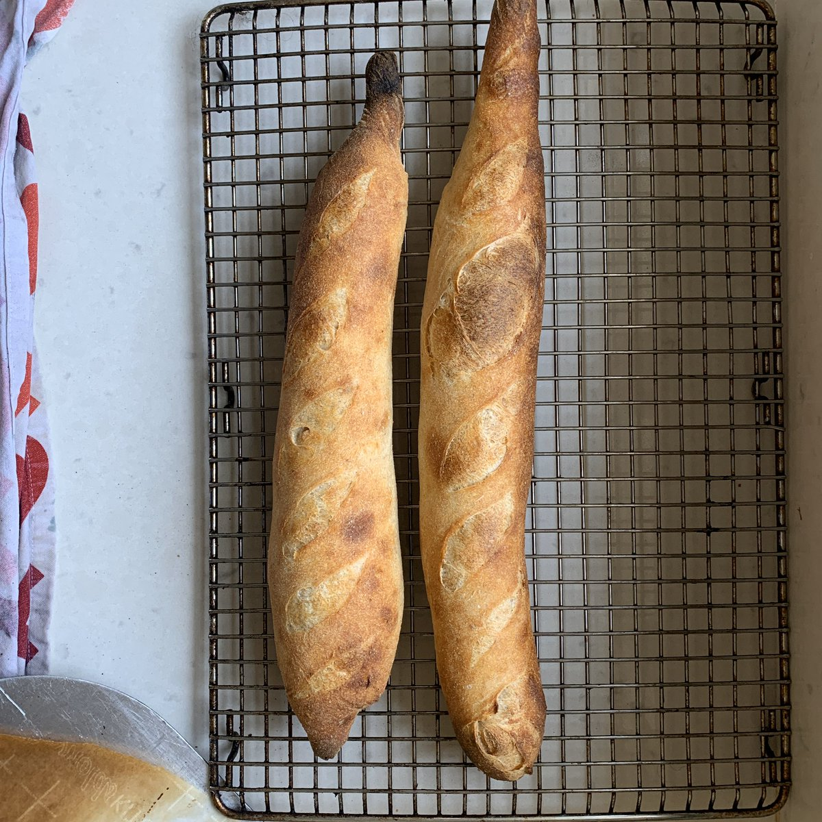 @cejarvis @tindsaylurner Made these with sourdough: