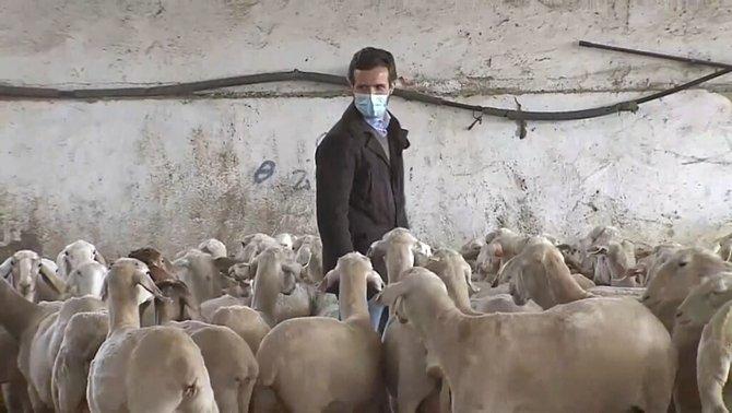 """Título de la película: """"El hombre que susurraba a las ovejas mientras hacía campaña electoral diaria en plena pandemia y sin hacer ni una sola propuesta en el congreso."""" https://t.co/UkKR2GoCnB"""