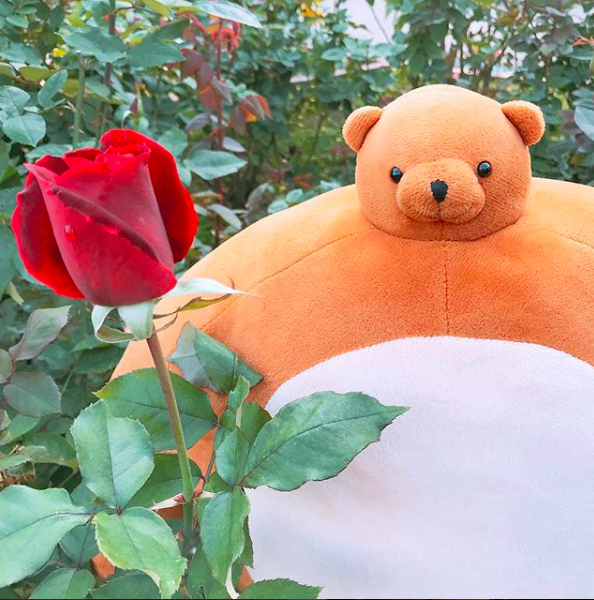 """""""Roses do not bloom hurriedly; for beauty, like any masterpiece, takes time to blossom."""" Luckly, Pip had plenty of time to sit and wait for this rose to blossom. He also has time to read poetry. 📸 : @neoteny4"""