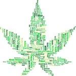 Image for the Tweet beginning: #cannabis #marijuana #weed Boom times