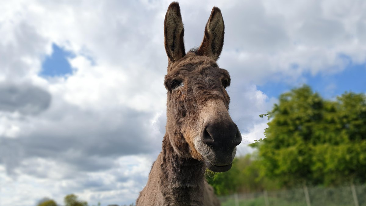 Happy Saturday from the lovely Sonny at our Leeds sanctuary! 😊