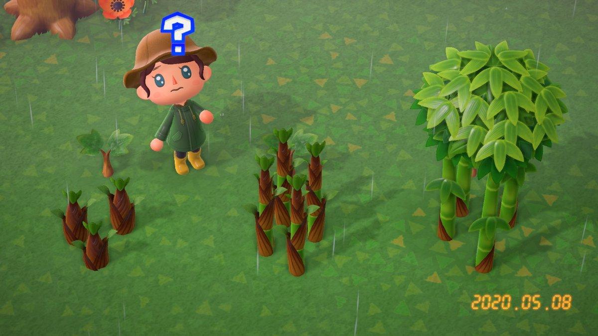 成長 木 あつ 止める 森 【あつ森】若木(中木)の育て方|成長の止め方【あつまれどうぶつの森】|ゲームエイト