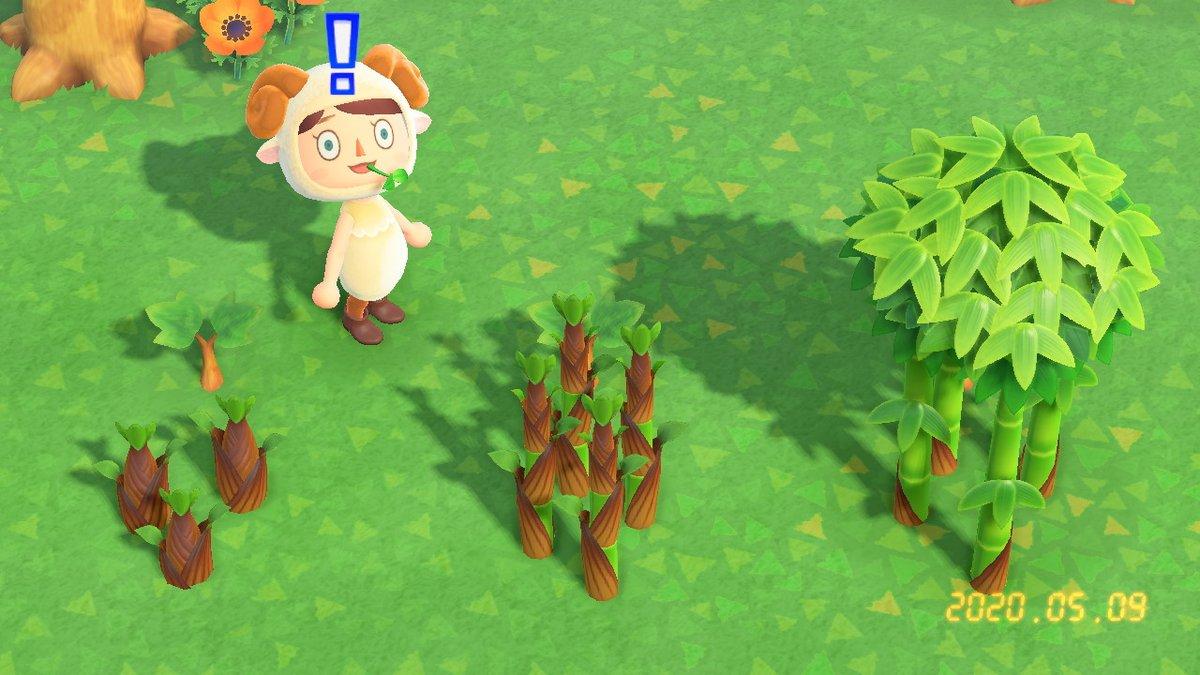 竹 育たない あつ森